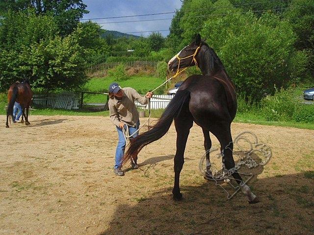 Horsemanship 7 Her
